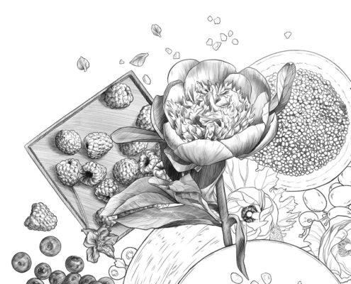Studio Sabine - Illustraties | Botanische illustratie voor gezonde voeding